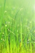 Preview iPhone wallpaper Summer, green grass, after rain, water drops
