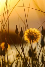 Preview iPhone wallpaper Sunset, grass, flower, dusk, early summer
