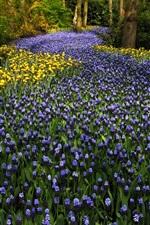 The Netherlands, Keukenhof Park, hyacinths flowers, tulips, trees
