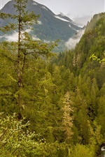 Preview iPhone wallpaper USA, Washington, Marblemount, forest, mountains, stream