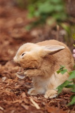Preview iPhone wallpaper Wild rabbit