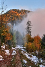Autumn, mountain, footpath, snow, forest, trees, fog, dawn