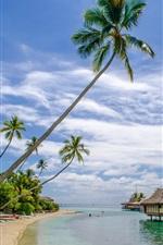 미리보기 iPhone 배경 화면 해변, 바다, 리조트, 집, 야자수, 열대