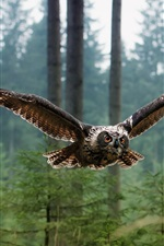 Birds of owl flying in the forest
