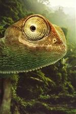 Chameleon close-up, nature, birds, sun rays, Desktopography pictures