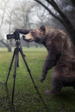 Preview iPhone wallpaper Creative pictures, bear is a photographer, catch moose