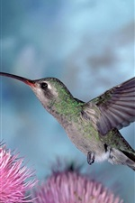 Preview iPhone wallpaper Flying bird, hummingbirds gather nectar, pink flowers
