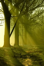 Preview iPhone wallpaper Forest, trees, snow melting, sun rays, spring