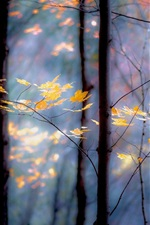 Preview iPhone wallpaper Forest, trees, twigs, leaves yellow, autumn