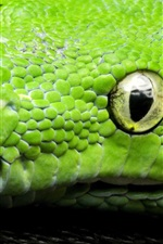 Preview iPhone wallpaper Green snake, eyes, scales, head close-up