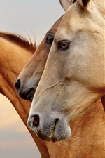 Preview iPhone wallpaper Horse portrait, side view, face, eyes