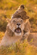 Preview iPhone wallpaper Lioness and cub play game