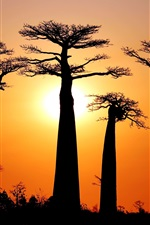Preview iPhone wallpaper Many baobabs, sunset, Morondava, Madagascar