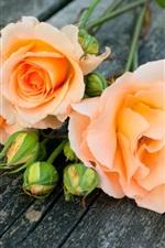 iPhone обои Оранжевые розы цветы