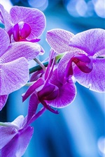Preview iPhone wallpaper Phalaenopsis, orchids, pink flowers, branch