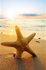 Preview iPhone wallpaper Starfish at sunset beach, sea, sun