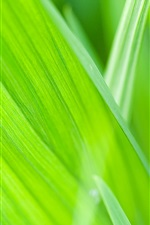 Preview iPhone wallpaper Summer green, plants, grass close-up
