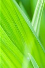 iPhone fondos de pantalla Verano verde, plantas, primer plano de hierba