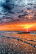 Preview iPhone wallpaper Sunset, sea, beach, coast, waves, birds