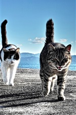 미리보기 iPhone 배경 화면 해변에서 산책 두 고양이