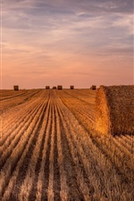 Preview iPhone wallpaper Wheat field, hay, summer, sunset