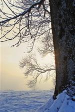 미리보기 iPhone 배경 화면 겨울, 나무, 눈, 황혼
