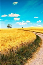 Preview iPhone wallpaper Yellow wheat fields, road, blue sky, clouds