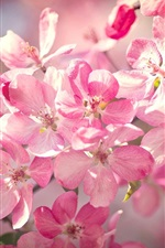 Beautiful cherry flowers bloom, pink petals, spring, bokeh