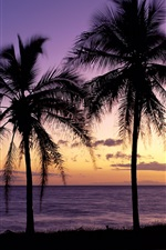 Preview iPhone wallpaper Beautiful sunset, silhouette, palm trees, Maui, Hawaii, USA