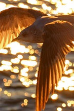 Preview iPhone wallpaper Bird flying on water top, sunset, glare