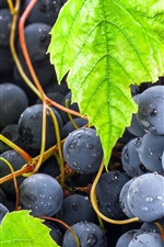 Black grapes, green leaves, fruits close-up