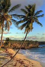 Preview iPhone wallpaper Bottom Bay Beach, Barbados, Caribbean, beautiful tropical scenery