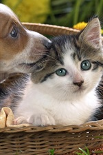 Cute puppy and kitten in the basket