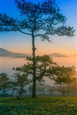 Preview iPhone wallpaper Dawn nature scenery, morning, mountains, pine trees, fog, sunrise