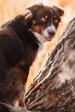 Preview iPhone wallpaper Dog in a tree, look back