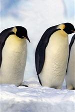 Preview iPhone wallpaper Emperor Penguins, Antarctica, snow, cold