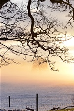 Preview iPhone wallpaper Evening light, snowy field, tree, fence, Perthshire, UK