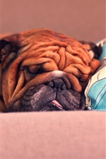 Preview iPhone wallpaper French Bulldog sleeping