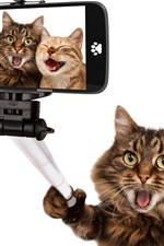 Preview iPhone wallpaper Funny animals, cat selfies, happy