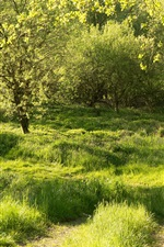 Preview iPhone wallpaper Germany, Bavaria, Regenstauf, forest, grass, trees, green, summer