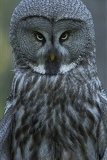 Preview iPhone wallpaper Great gray owl in the forest