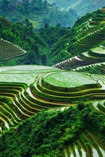 Preview iPhone wallpaper Guangxi Longsheng rice terraces, beautiful landscape, China