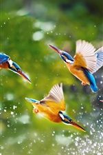 Preview iPhone wallpaper Kingfisher touch water close-up