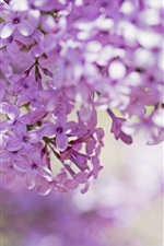 Preview iPhone wallpaper Lilac, pink petals, flowers, branches, bokeh