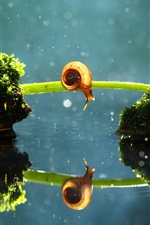 Preview iPhone wallpaper Lonely snail, grass bridge, moss, water reflection