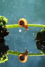 iPhone обои Одинокий улитка, трава мост, мох, вода отражение