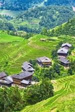 Longji Terraces, rice fields, Guilin, China