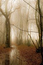 Floresta da manhã, árvores, névoa, água, outono