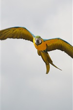 Preview iPhone wallpaper Parrot flight, wings, sky