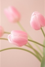 Preview iPhone wallpaper Pink flowers, tulips close-up, bokeh